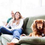 וילונות לסלון – לעצב את החלל המרכזי בבית